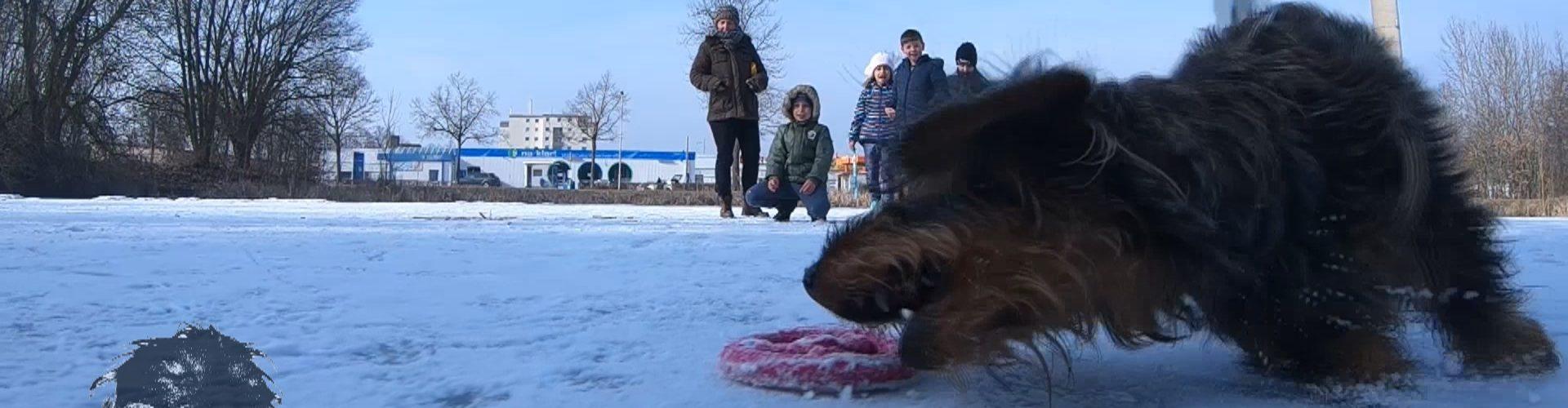 Frytka on the ice Slow Motion
